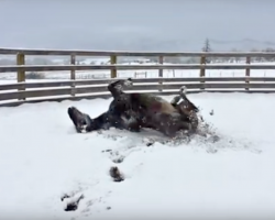 After Decades In An Enclosed Stall, This Horse's Freedom Is A Treat To Watch