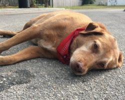 Man Makes Promise To A Dying Dog, And Does Everything He Can To Keep It