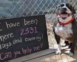 Lonely dog sits at a shelter for 2,531 days waiting for one human to love her!