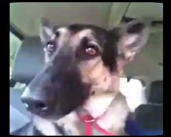 "Dog's Favorite Song Comes On The Radio. Her ""Dance"" Moves Has The Whole Internet Cracking Up"