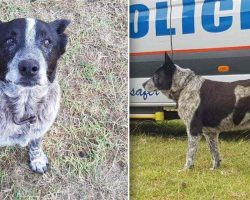 Elderly Deaf Dog Keeps Lost 3-Year-Old Safe Through The Night, Leads Rescuers To Her