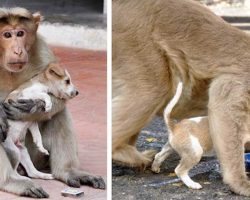 Monkey Adopts Stray Puppy, Makes Sure He Eats First