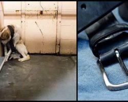 Neglected shelter dog hides in corner of kennel until Vet Finds out the truth