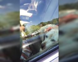 Police Officers Rescue Two Dogs From Overheated Cars That Reached 150 Degrees