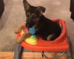 Puppy With Special Needs Doesn't Let Anything Stop Him From Enjoying Life