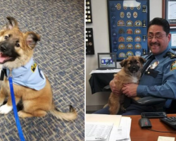 Police Department Brings In Rescue Puppy, And His Job Title Is To Die For