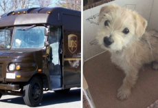 UPS Driver Pulls Over When He Sees A Car In Front Of Him Abandon A Puppy In The Road
