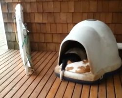 Woman Spots Her Dogs Sleeping and Films Hilarious Surprise