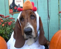 17 Costumes That Prove Basset Hounds Always Win At Halloween