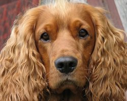 Top 10 Things Cocker Spaniels Don't Like