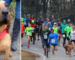 Owners let dog out for potty break. Dog accidentally joins half-marathon, finishes race in 7th place