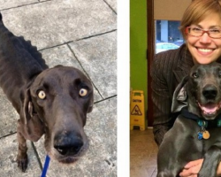 Dog Who Survived On Rocks And Twigs Looks So Beautiful Now