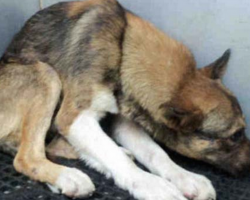 Shelter Dog Wouldn't Look Anyone In The Eye As If He Deserved To Die