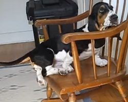 Basset vs. Rocking Chair