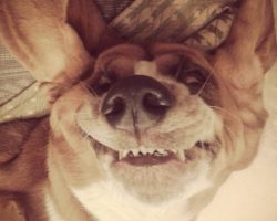 10 Things That Make Basset Hounds Happy