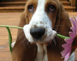10 Basset Hounds Totally Defying The Laws Of Physics