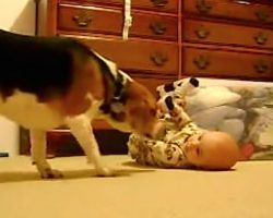 Dog Does The Cutest Thing When Meeting Baby For The First Time
