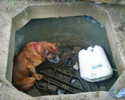Little Girl Finds Boxer Still Alive In Concrete Grave, Acts Fast To Save Her Life