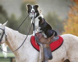 Top 10 Dogs And Horses: Friends For Life!