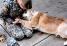 Old Dog Begins To Cry When She Sees Her Best Friend Return From The Army