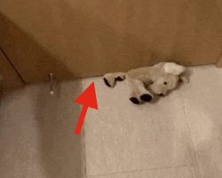 "Sneaky ""Thief"" Makes Stuffed Animal Disappear Under Door"