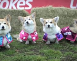 Royal Baby Name Predicted By A Corgi Race