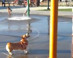 Adorable Corgi Discovers The Joys Of The Water Park