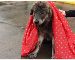 'Pitiful' Wet Stray Won't Budge From Parking Lot Until Stranger Makes Kind Gesture