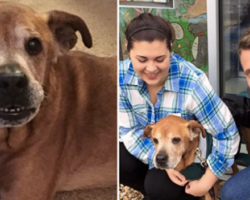 Couple Goes To Shelter To Donate, Leaves With 17-Year-Old Dog That Changes Their Lives