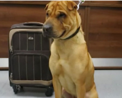 Dog Abandoned At Train Station Tied To A Suitcase, Rescuers Heartbroken At What's Inside