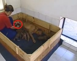 Rhodesian Ridgeback Is Mom To More Than Just Her Puppies