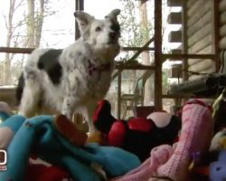 This Amazing Dog Knows The Names Of More Than 1,000 Toys