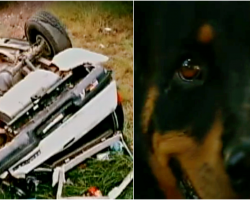 Dog Waits 13 Days for Family At Car Crash Site Before Finally Being Discovered