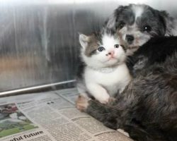 Homeless Dog Adopts and Nurses Abandoned Kitten