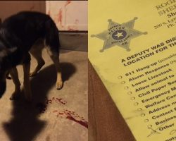 Police Officer Shoots Dog, Then Leaves Note for Family Before Continuing With His Day