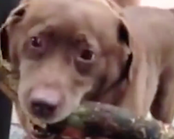 The 'Stick' That This Dog Is Determined To Take Home Has Mom On The Verge Of Tears