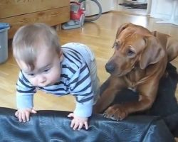 Little Boy Tries Climbing Into The Dog Bed. What The Dog Does Is TOO Precious!
