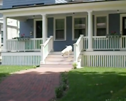 Mailman Stops And Waits Outside Of The House, Then The Dog Comes Running