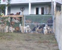 Man Adopts 45 Dogs And Lets Them Run Free In A Four-Acre Enclosure