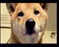 Mom Asks Dog To Bark Softly, Dog's Response Is Internet Gold