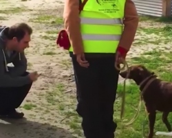 Lost Dog Doesn't Realize Dad's Right In Front Of Her — Until She Takes A Sniff