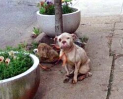 Postman Spotted Abused Dog Tied To A Tree – Teaches cruel owner a valuable lesson!