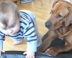 Sweet Dog Sees Baby Trying To Climb Into Her Dog Bed And Gives Him A Hand