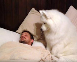 Dog needs a walk and Dad's still asleep. Dog wakes him up in hilarious fashion
