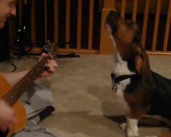 Gabby the Basset Sings