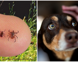 The Tick Epidemic: What You Need To Know And How To Properly Remove Them