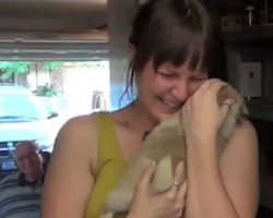 Man Surprises His Girlfriend With Puppy After Her Elderly Dog Passes Away