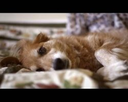 Woman's Elderly Dog Detects Breast Cancer Before Mammogram Does