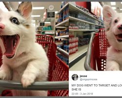 Dog's Photos At Target Are Winning Hearts All Over The Internet