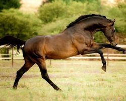 26 Best Horse Breeds Of The World